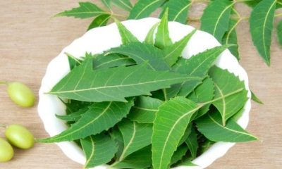 Neem-infused DIYs that will help you say goodbye to an itchy, flaky scalp